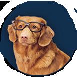 AI Wonk Dog
